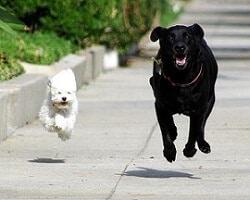 Cachorro branco e cachorro preto