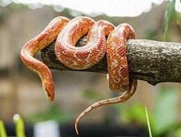 Cobra em tronco de árvore