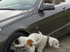 Cachorro fazendo xixi em roda de carro