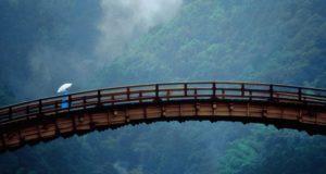 Ponte de madeira sobre floresta